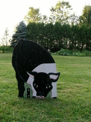 Cow (600x800)